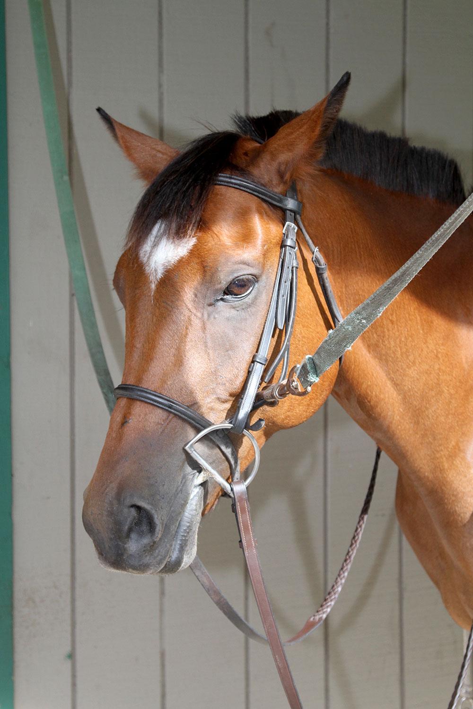 horse-boarding-orlando-florida-1