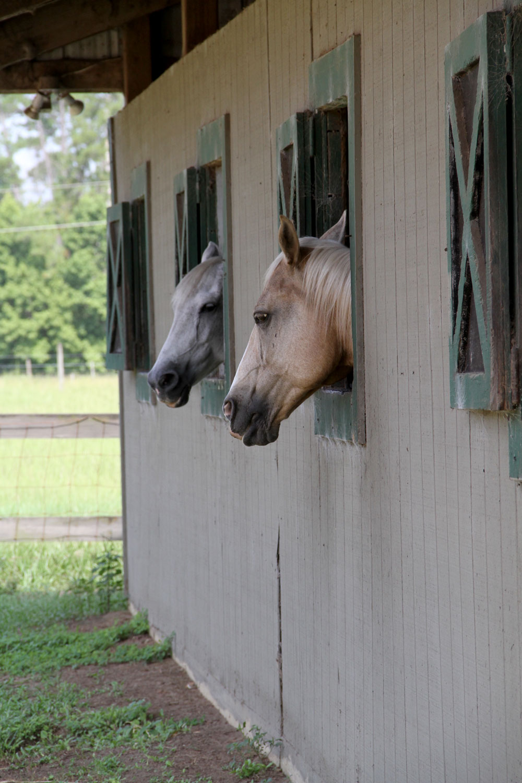 horse-boarding-orlando-florida-2